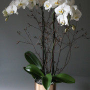 white-orchid-main