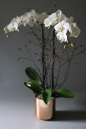 white-orchid-main1