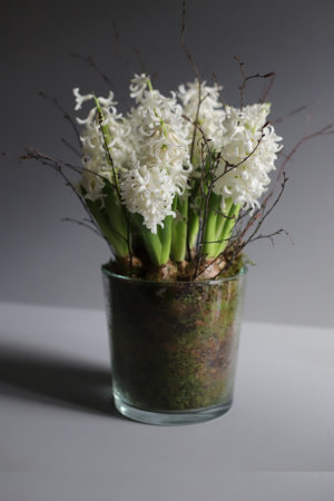 Luxury_hyacinth_planter_white
